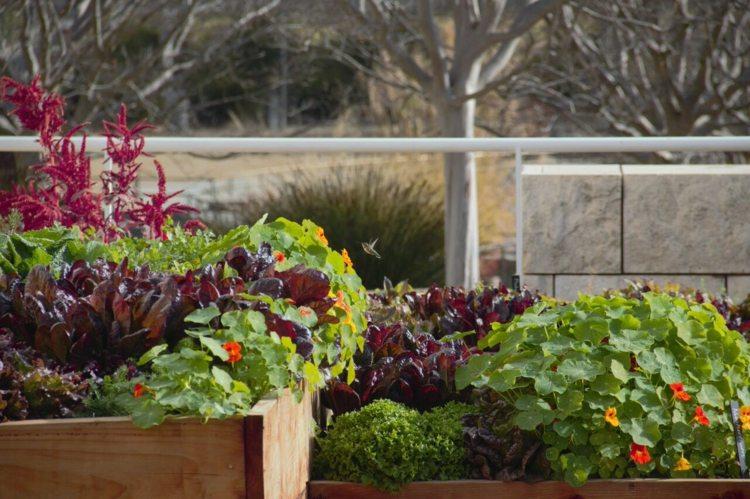 bonitas selección plantas jardín