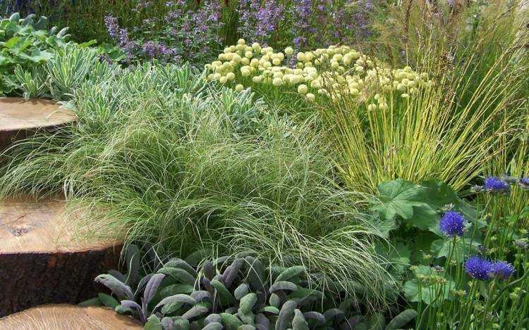 bonito diseño jardín moderno plantas