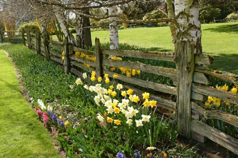 bonitos narcisos valla jardín madera
