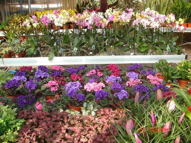 Plantas de exterior para terrazas y balcones 38 ideas for Plantas de invierno exterior