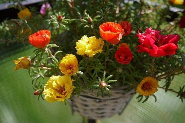 bonitas plantas de exterior