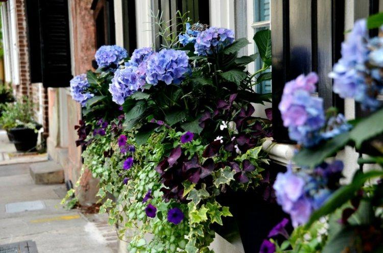 calidad plantas diseños frescos ventanas