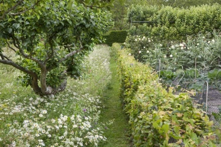 camino verde plantas flores