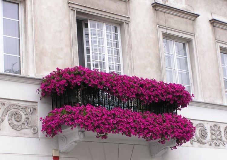 clasico colores casas diferentes ideas rosa