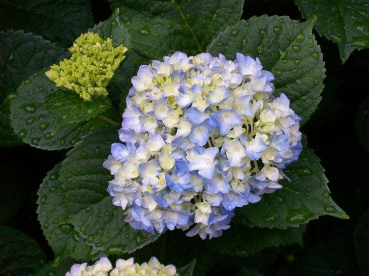 detalles flores llamativas azuladas paredes
