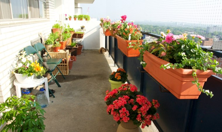 distintos tipos flores balcon pequeno ideas