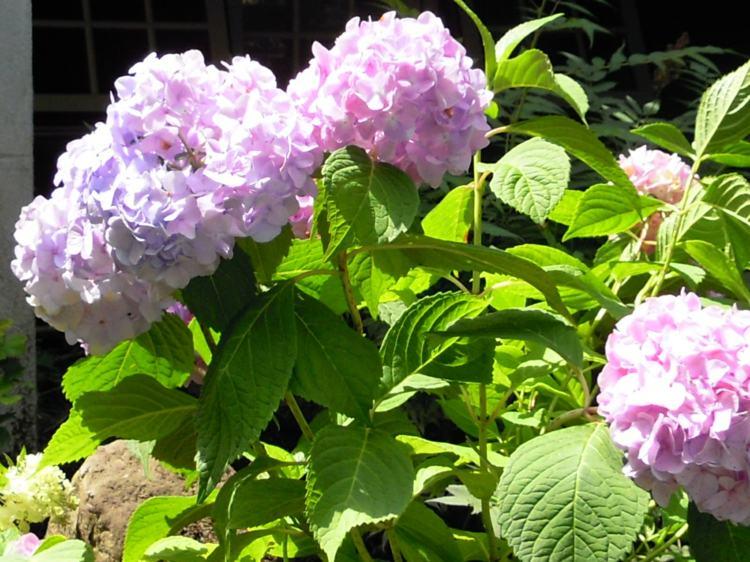 elegantes coloridas ramas seguras frentes rosa