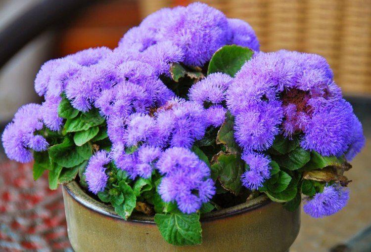 estuopendas flores color morado damasquino