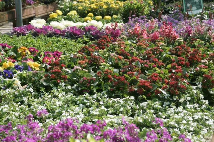 estupendas flores terraza exterior