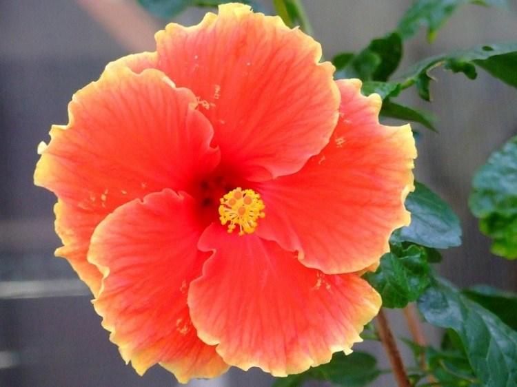 flores balcon soluciones flores verano casas