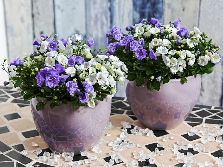 flores balcon soluciones ideas detalles estilos