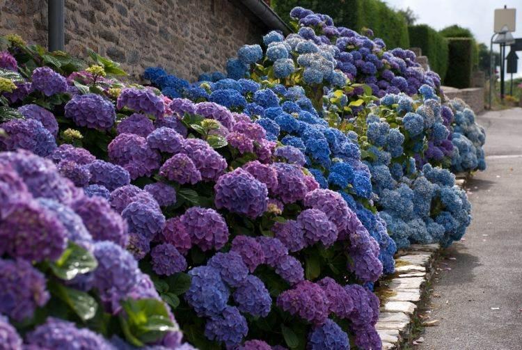 decoración exteriores hortensias colores