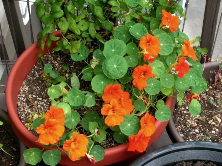 flores terraza color naranja alegrñía
