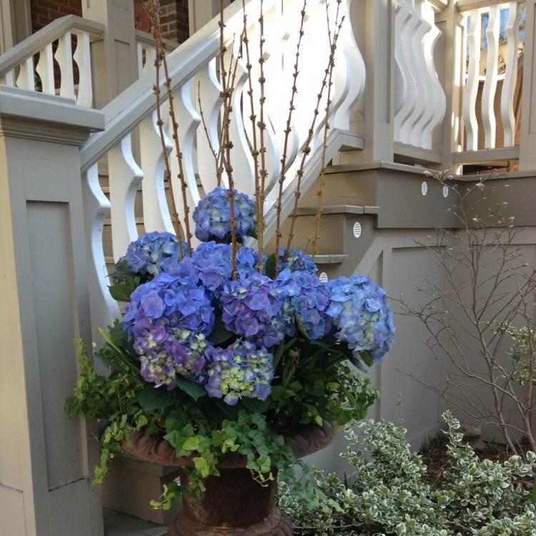 hortensia cuidados detalles escaleras muros ideas