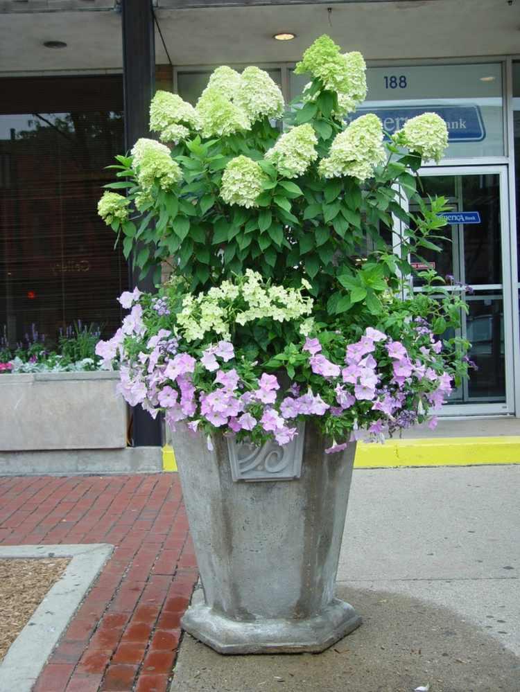 hortensia cuidados detalles ideas exteriores suelos