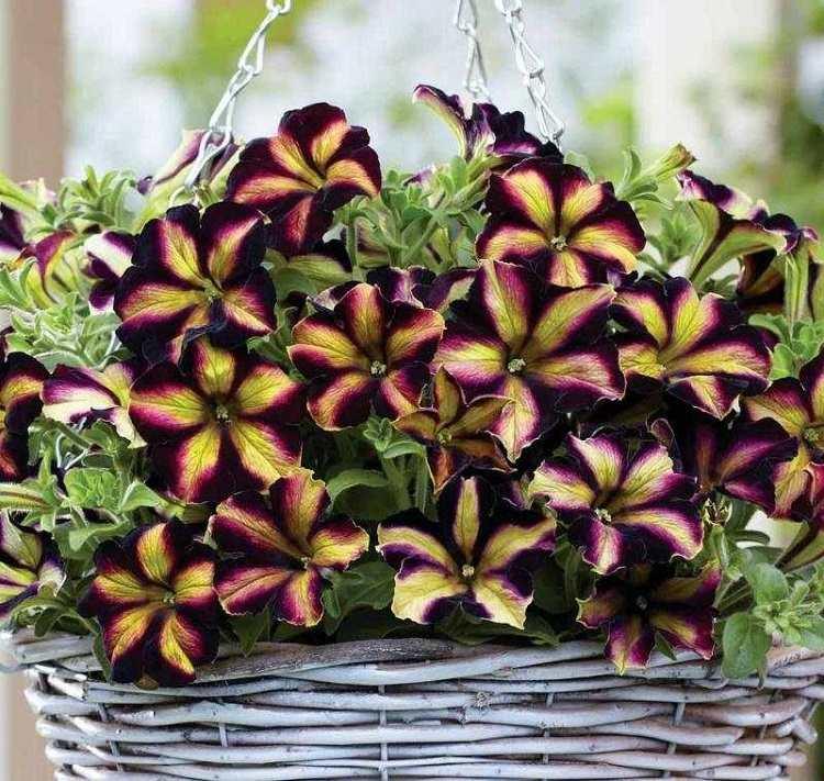 ideas decorado estilos verdes petunias canastas