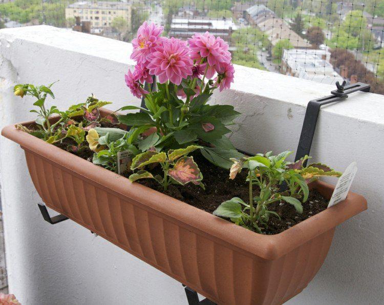 jardinera terraza flor color rosa