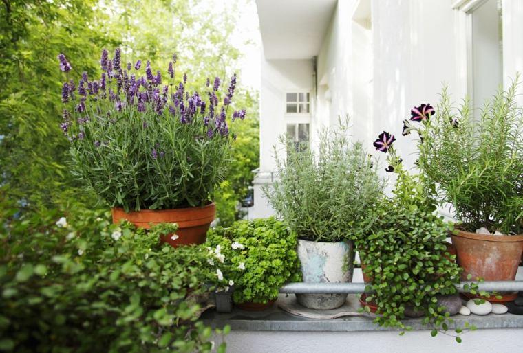 plantas perfectas balcon flores bonitas ideas