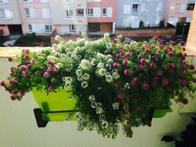 plantas perfectas balcon maceta verde ideas