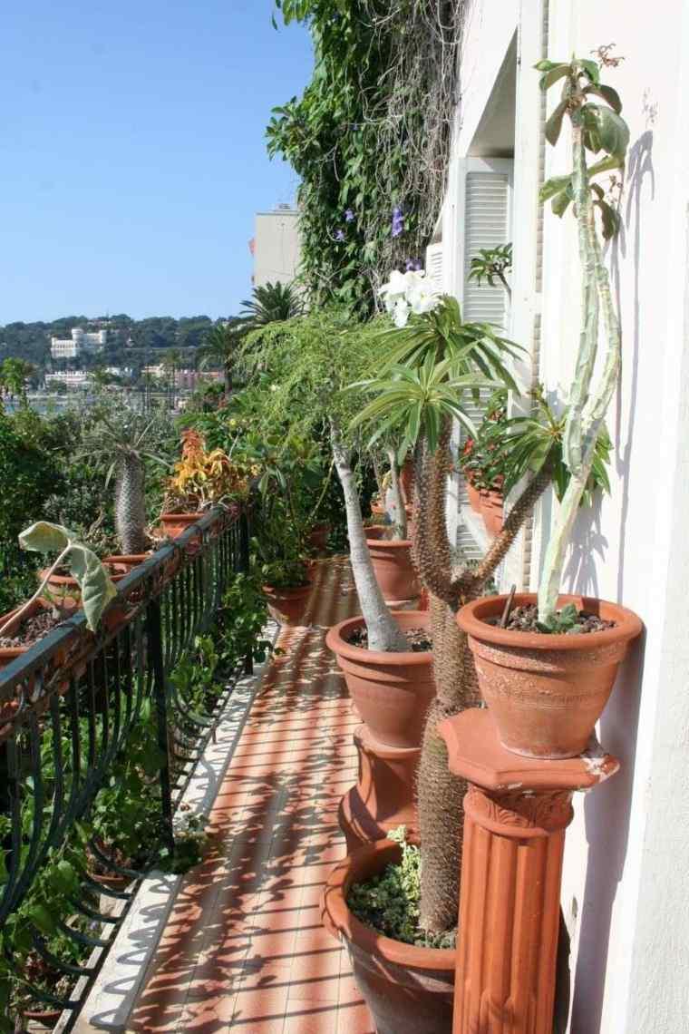 plantas perfectas balcon palmeras cactus ideas