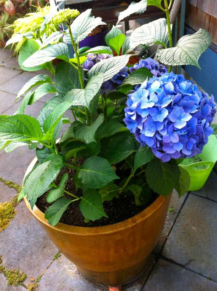 macetas bajas plantas barro atractiva
