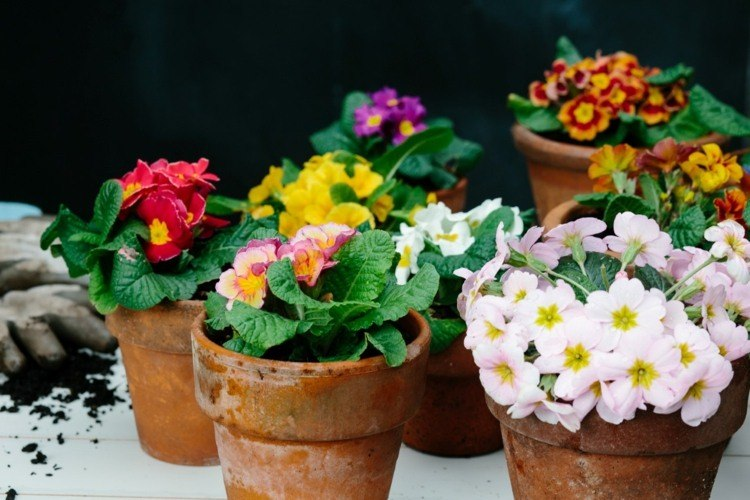 macetas flores deco terraza deco