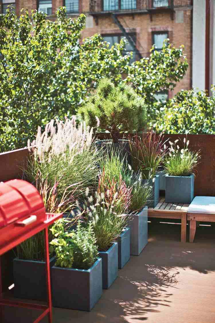 Plantas de exterior para terrazas y balcones - 38 ideas -