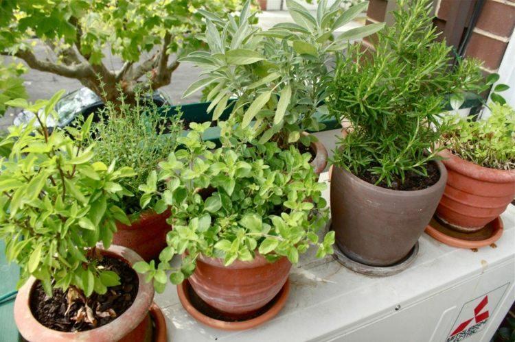 macetas plantas decoración terraza