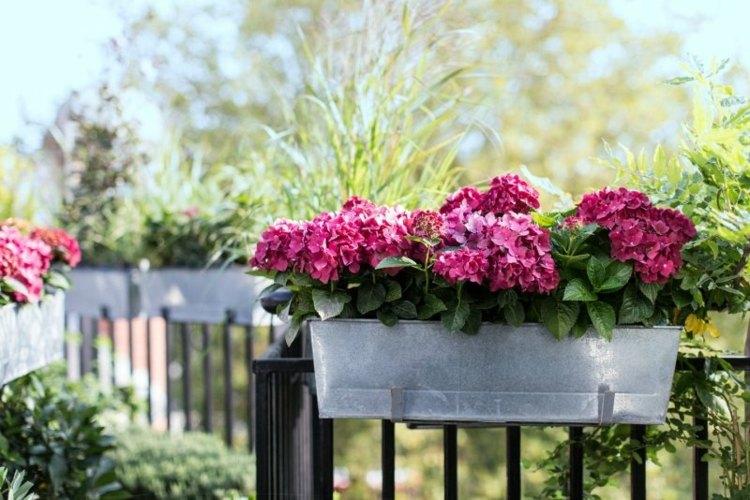 maceteros tupido vegetales flores contrastes rojo metales