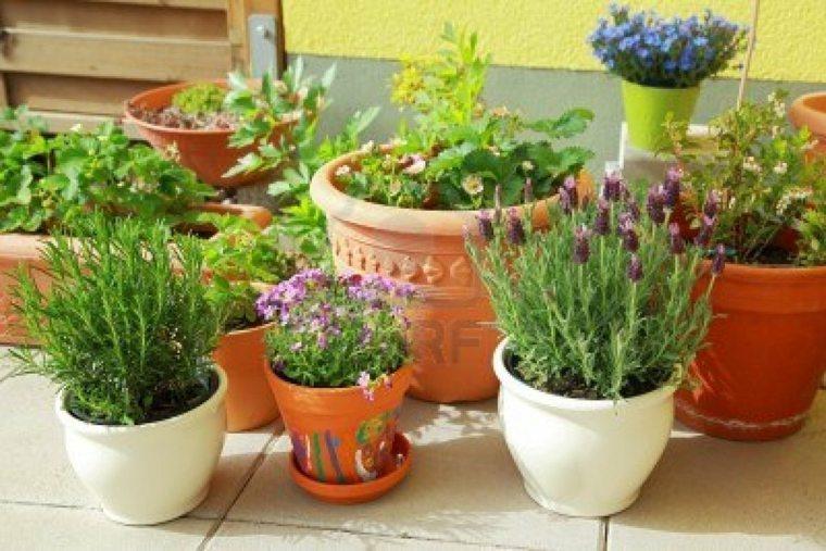 decorar muchas macetas flores diferentes