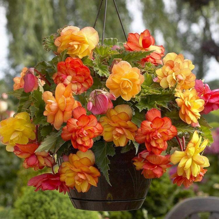 original diseño flores colores