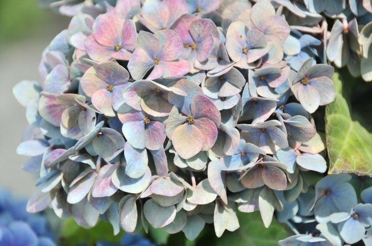 Flor de paja - 1 6
