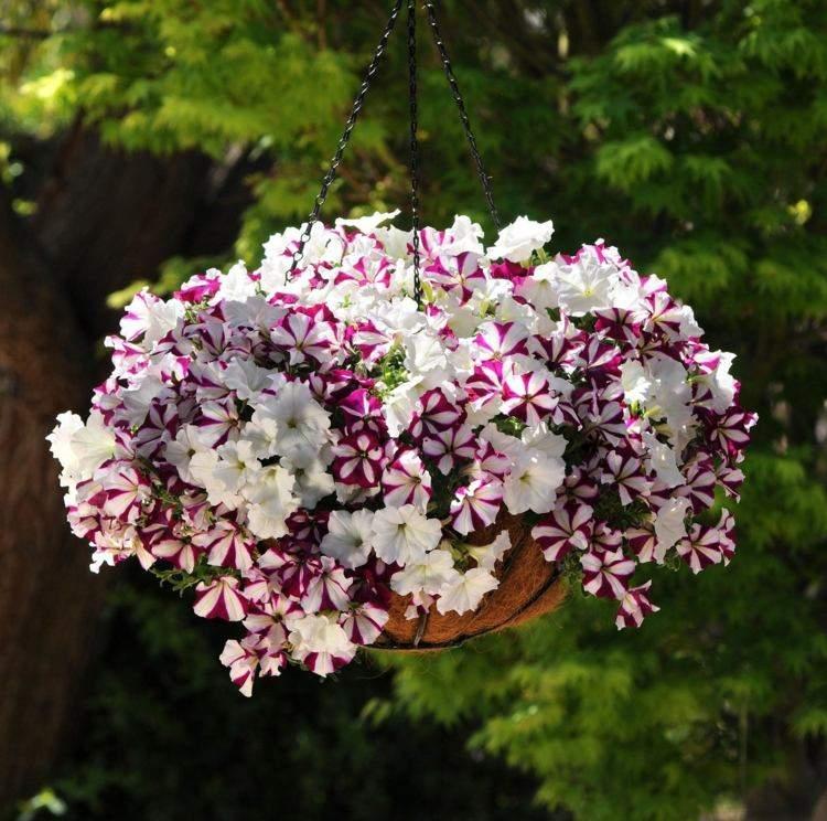 petunias colores deco terraza