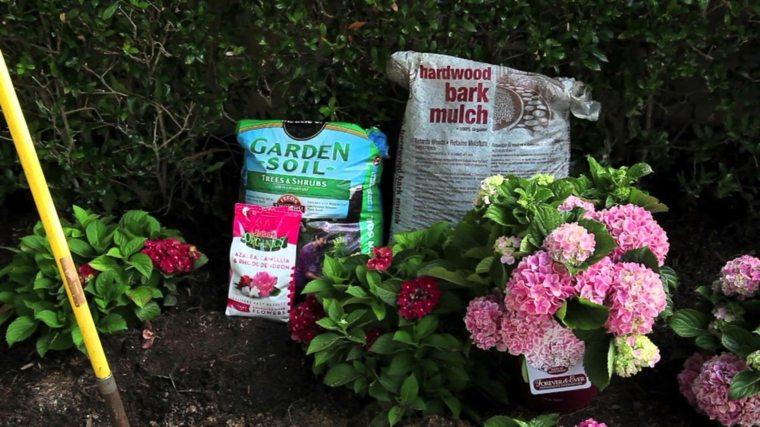 plantar hortensia siembra cuidados