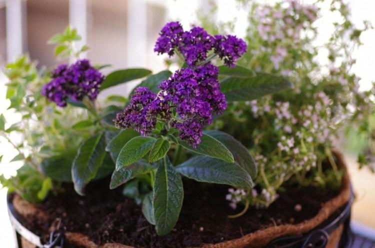 Plantas De Exterior Para Terrazas Y Balcones 38 Ideas