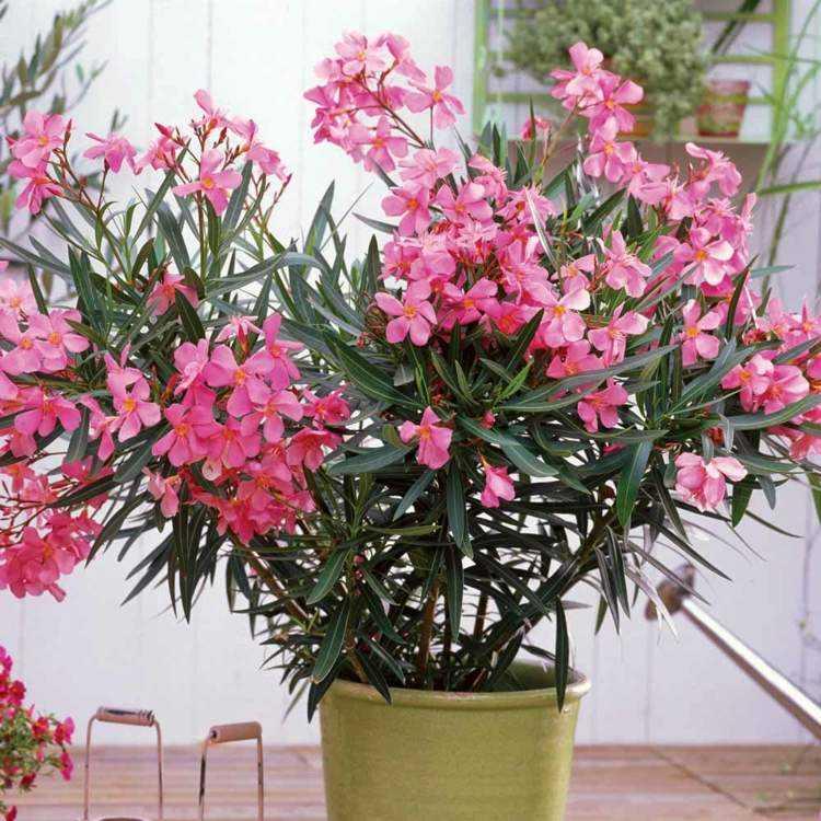 Plantas de exterior para terrazas y balcones 38 ideas - Plantas para macetas exterior resistentes ...