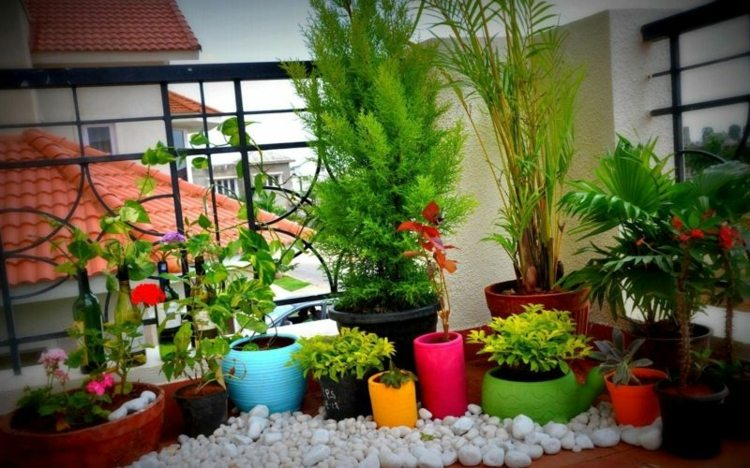 Plantas de exterior para terrazas y balcones 38 ideas - Macetas para plantas de interior ...