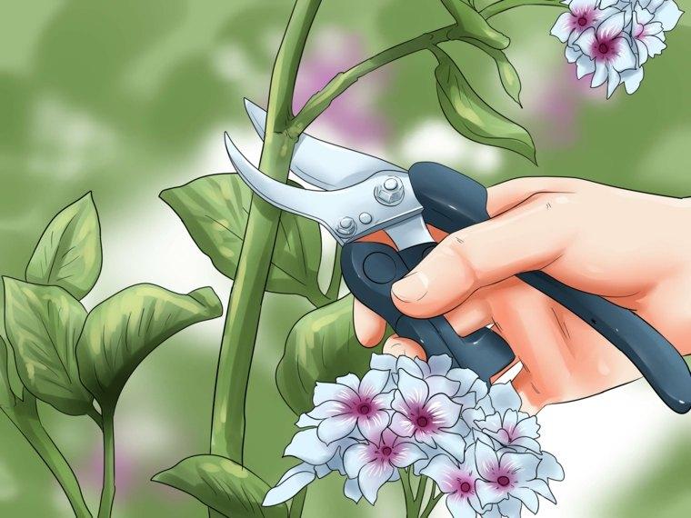 podar hortensia flores jardin