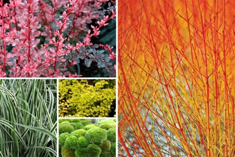 selección plantas diferentes colores