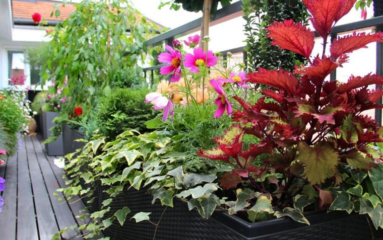 selección plantas decoración balcón colores