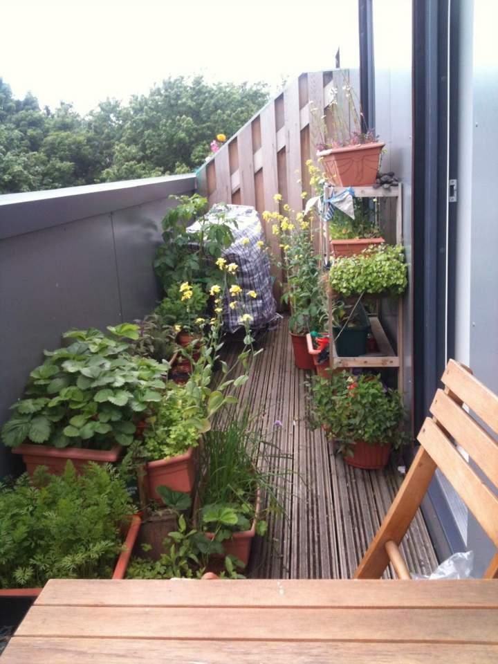 small terrace decorate plants