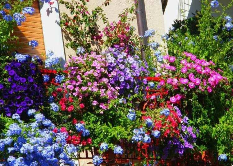 tupido vegetales flores contrastes rojo colorido