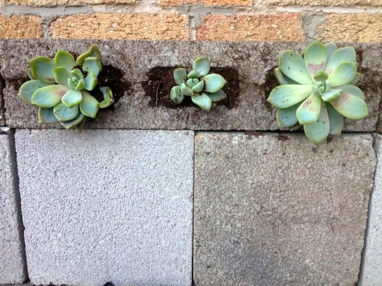 agujeros pared ladrillos cemento plantas