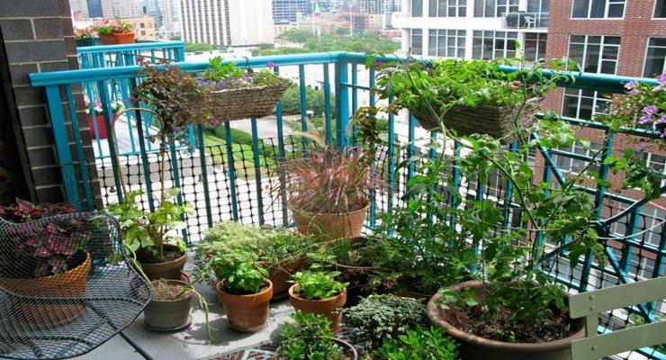 decorar terrazas muchas macetas