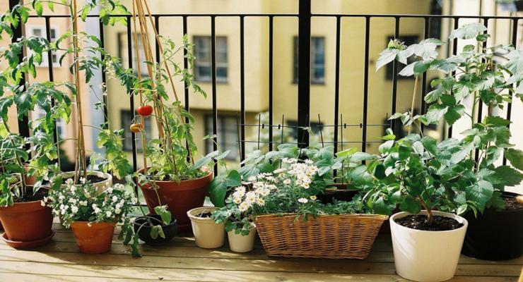 original decoracion plantas balcón
