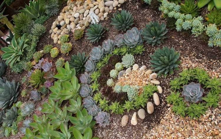 bonito diseño plantas arena guijarros