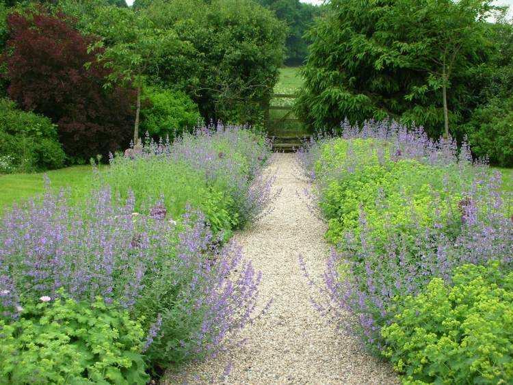 camino jardin gravilla plantas