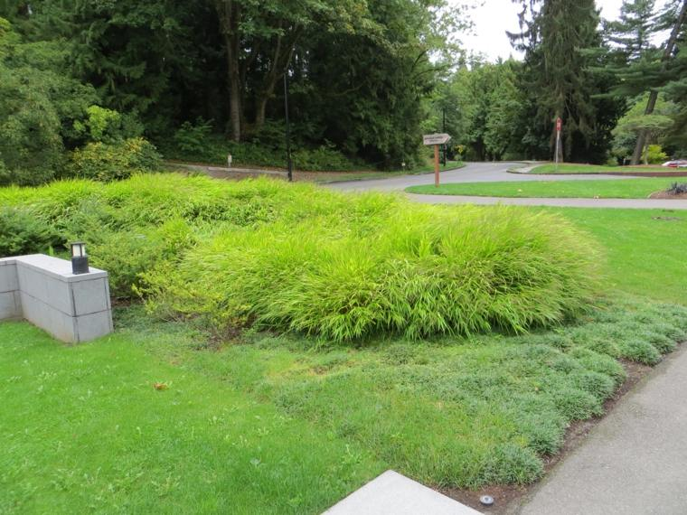cesped jardin plantas opciones hierba montana japonesa ideas