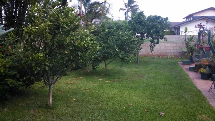 citicos frutales patios cosechas cesped