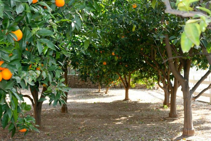 citricos plantas altas salidas soluciones colores